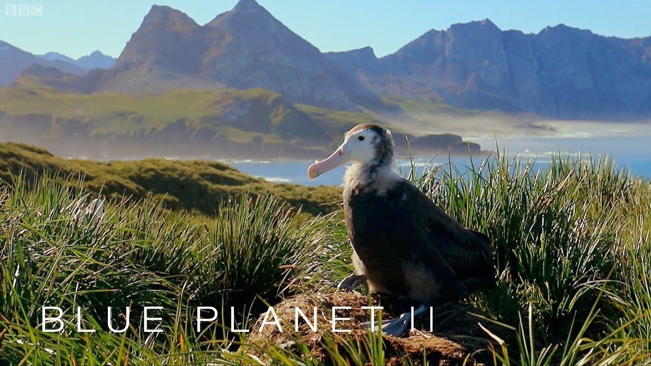 Albatrosses Are Ingesting Plastic