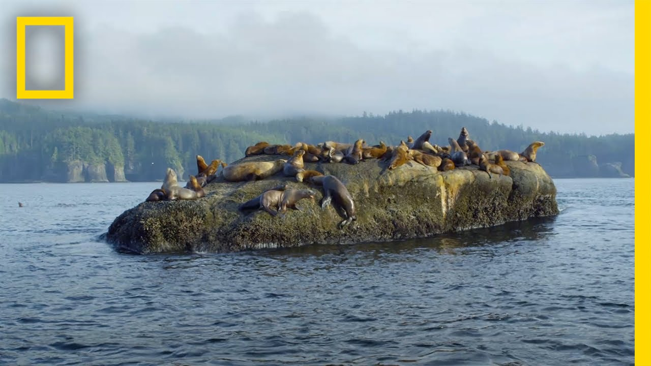 The Sea Otter's Enchanted Forest | America's National Parks