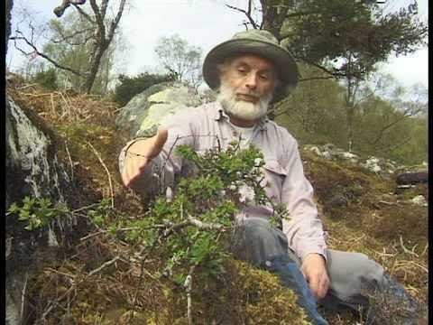 Trees For Life : Dundreggan