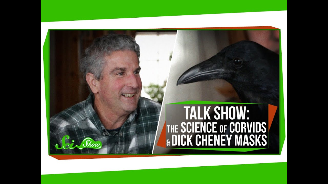 SciShow Talk Show: The Science Of Corvids & Dick Cheney Masks